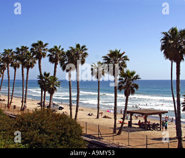Palm trees on the beach in San Clemente Beach CA - Stock Photo