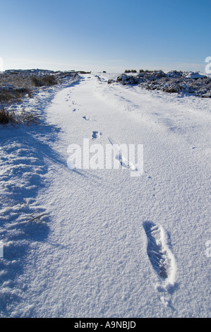 Footprints in fresh snow Froggatt edge Derbyshire Peak district national park England UK GB EU Europe - Stock Photo