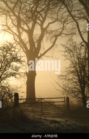 Sunlight breaking through fog behind a farm gate, Ratho, Edinburgh, Scotland, UK. - Stock Photo