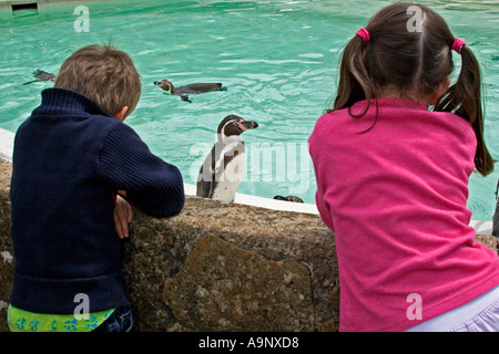 A young boy and girl gazing at a penguin at Cotswold Wildlife Park Oxfordshire UK - Stock Photo
