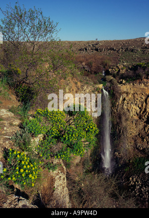 Israel Golan Heights Gamla nature reserve The waterfall view withflowers and tree in frgd - Stock Photo