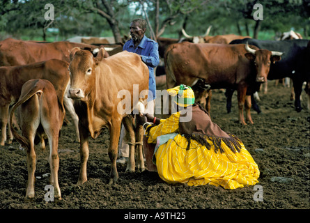 Herero Woman wearing traditional clothes and headdress milking a cow Herero women are the only woman permitted to - Stock Photo