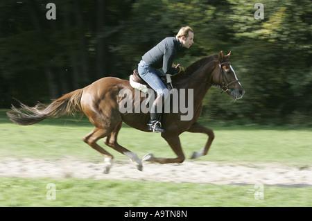 Rider exercising his horse in the Englischer Garten park in Munich.. - Stock Photo