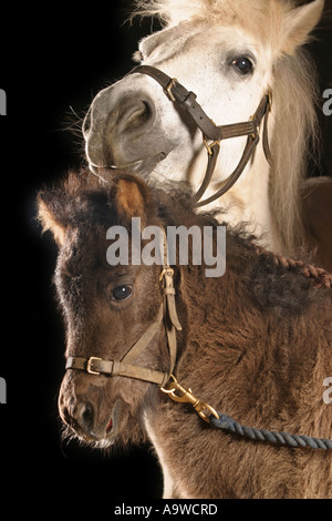 A White Mare and her Black Foal - Stock Photo