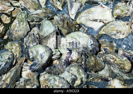 oysters on ice - Stock Photo