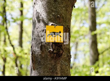 Marker lynx, Bayerischer Wald National park, Lower Bavaria, Germany - Stock Photo