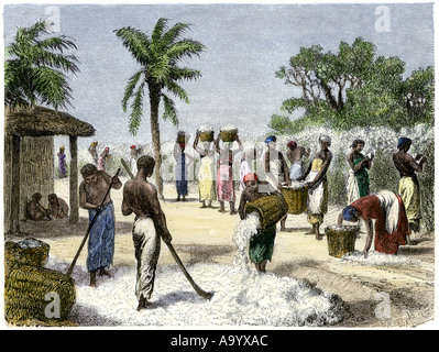 Slaves bringing in the cotton harvest. Hand-colored woodcut Stock Photo