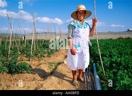 Agriculture - A farm woman poses while working in a tomato field / Island of Ibiza, St. Antoni, Spain. - Stock Photo