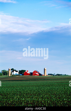 Farmstead with white house, red barns, silos and a field of early growth grain corn in the foreground / Genoa, Illinois, - Stock Photo