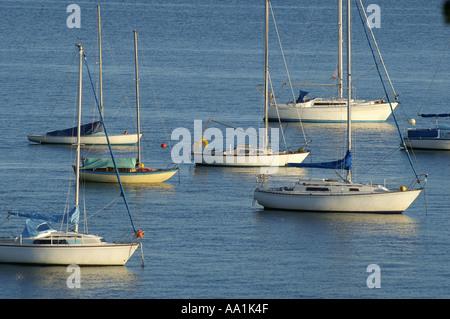 stack of yachts on moorings at Loe Beach Carrick Roads Cornwall England UK Europe - Stock Photo