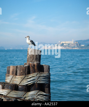 Seagull on a piling with Alcatraz behind, taken from Fishermans Wharf, San Francisco, California, USA - Stock Photo