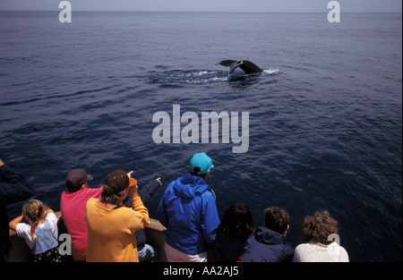 lz64 people on boat spot a Humpback Whale, Megaptera novaeangliae. New England Atlantic Ocean. Photo Copyright Brandon - Stock Photo
