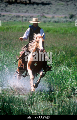 A cowboy and his horse running through a wetland in Oregon - Stock Photo