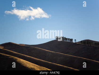 A solitary cloud in a clear blue sky hovers over a row of trees on a New Zealand hillside - Stock Photo