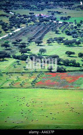 Alentejo, South of Portugal. Typical landscape with sheeps and flowers near Monsaraz. - Stock Photo