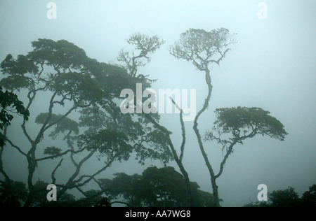 Dense mist in the rainforest of Pirre mountains in the Darien national park, Darien province, Republic of Panama.