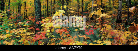 Autumn colours in the Saco Valley White Mountains New Hampshire USA - Stock Photo