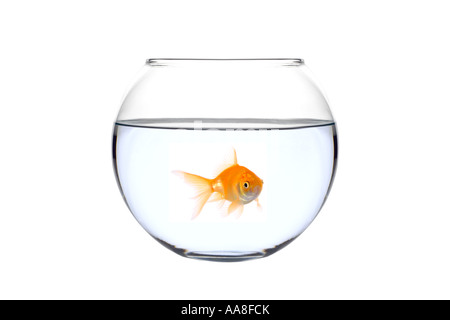 A golden fish in a bowl - Stock Photo