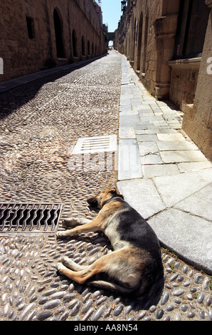 A dog lying in the street in the Old Town in Rhodes - Stock Photo