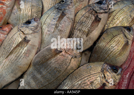 Rows of sea bream on a fishmonger's stall. - Stock Photo