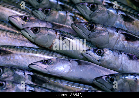 Rows of mackerel on a fishmonger's stall - Stock Photo