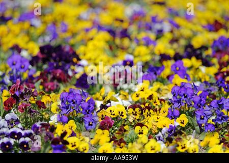 Garden of flowers - Stock Photo