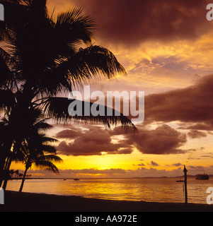 Spectacular dramatic sunset reflecting in a smooth calm sea with silhouette of palm tree off Viti Levu Island Fiji - Stock Photo