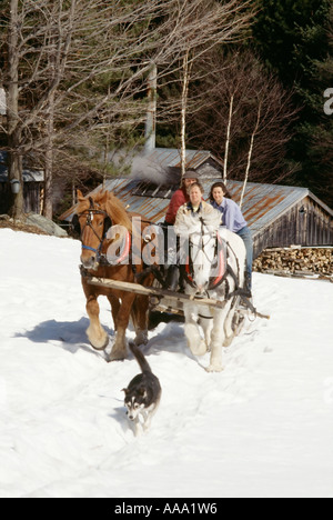 A trio of maple sugar makers use a horse drawn sleigh to get to their sap buckets in their sugarbush in New England. - Stock Photo