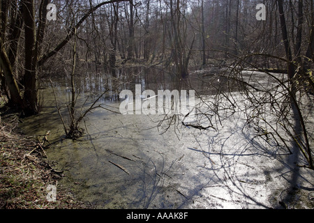 Waldteich pond in a wood  - Stock Photo