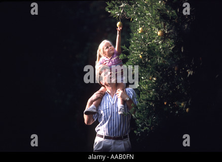 A father puts his daughter on his shoulders so she can pick an orange on a tree in an orchard - Stock Photo