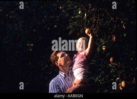 A father puts his daughter on his shoulder so she can reach an orange on a tree in an orchard - Stock Photo