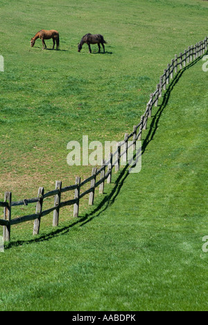 Horses Grazing In Hill Field With Curved Wooden Rail Fence, Pennsylvania, USA - Stock Photo