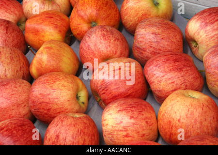 red apples at a market - Stock Photo