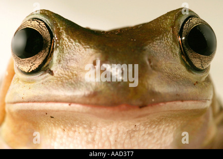 frog face - Stock Photo