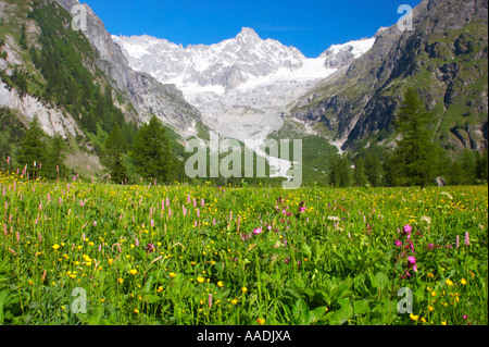 Switzerland Valais Val Ferret. A colourfull wild flower meadow against a dramatic mountain backdrop near the village - Stock Photo