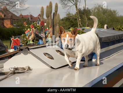 Dog on a canal barge in Willington - Stock Photo