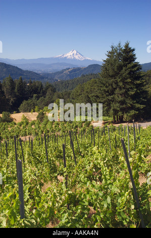 Vineyards and Mount Hood view from Wind River Cellars above the Columbia River Gorge at Husum & Vineyards and Mount Hood view from Wind River Cellars winery above ...