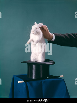 MAGICIAN PULLING RABBIT OUT OF TOP HAT MAGIC TRICK WAND - Stock Photo