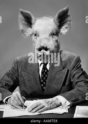 1970s MONTAGE OF PIG HEADED BUSINESSMAN IN SUIT AT DESK - Stock Photo