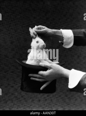 1930s MAGICIAN HANDS PULLING RABBIT OUT OF TOP HAT - Stock Photo