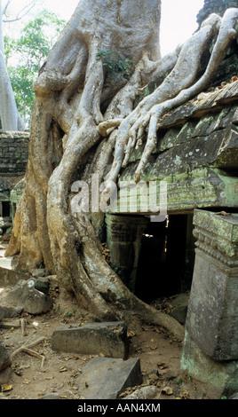 Silk cotton tree roots over crumbling lichen covered stone ruins, Ta Prohm Temple, Cambodia - Stock Photo