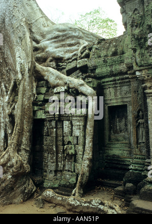 Silk cotton tree roots growing over doorway in lichen covered crumbling ruins, Ta Prohm Temple, Cambodia - Stock Photo