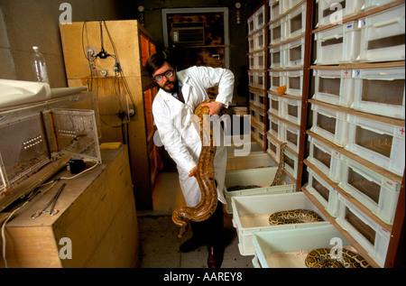 EXOTIC ANIMALS MOSCOW 1995 SERGEI RYABOV ON HIS REPILE FARM IN TULA - Stock Photo
