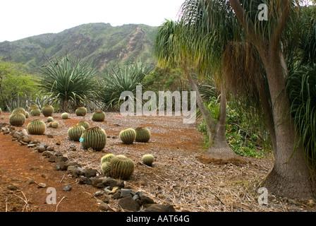 Golden Barrel Cactus Echinocactus grusoni Koko Crater Botanical Garden Honolulu Oahu Hawaii - Stock Photo