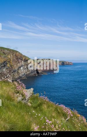dh  WHALIGOE CAITHNESS Seacliffs North Sea coast and Sea pinks