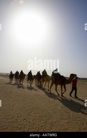 vertical hot sun beating down on sands and camel train in the sahara desert at Douz Tunisia - Stock Photo