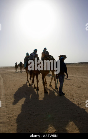 tourists on hot camel ride in the sahara desert at Douz Tunisia - Stock Photo