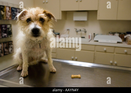 An unhappy dog waits at the vet - Stock Photo