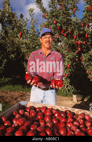 Agriculture - An apple grower displays his recently harvested Red Delicious apples with his orchard behind him / - Stock Photo