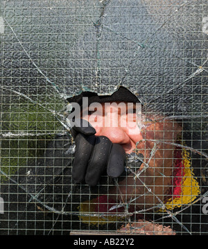 Burglar breaking and entering into a private property by smashing through wire enforced glass pane. - Stock Photo